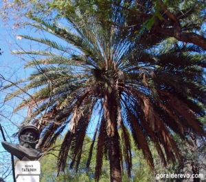 Памятник Гагарину Никосия Кипр