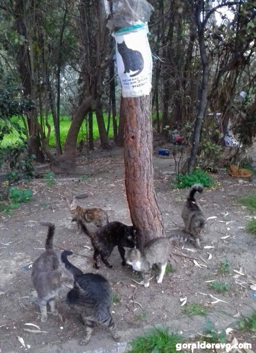 Кипр кошки
