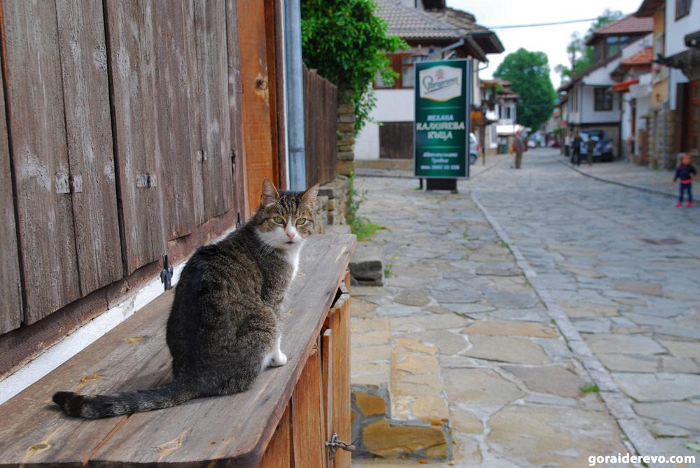 коты Болгария