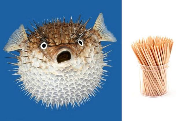 рыба зубочистка
