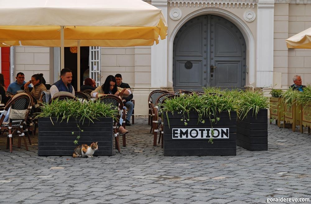 кошки в Румынии