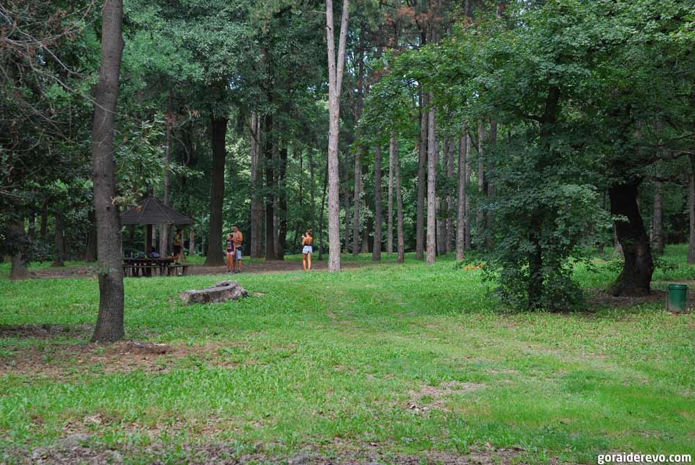 зелёный парк Кошутняк