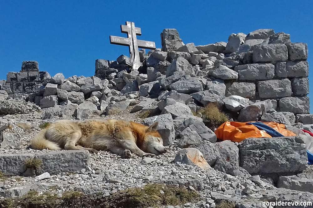 собака на руинах